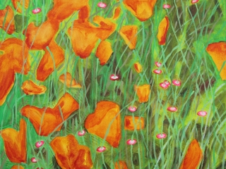 Orange poppies amongst the long grass.